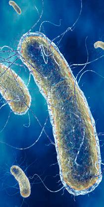 analyse d'eau contrôles détection Légionella Pneumophila Be3c tarn-et-garonne 82